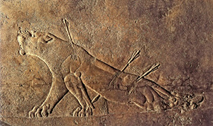 A bas-relief of a wounded lioness from the Palace of Ashurbanipal at Nineveh, in the British Museum.