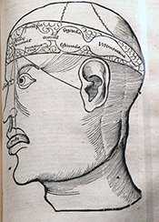 Figure 1. From Gregor Reisch (Margarita Philosophica cum Additionibus Novis, 1517) depicting the localization of the functions of the soul: sensorium commune and imaginatio in the first cell (lateral ventricles), cogitatio (reasoning) in the middle, and memory in the posterior cell (our fourth ventricle).